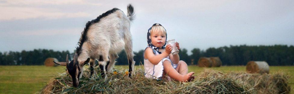 Драгоценное  козье молочко… А что ещё?