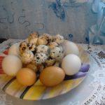 Домашние яйца - куриные, утиные, перепелиные