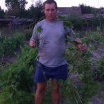 Прирост саженца от черенка весенней посадки